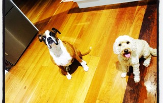 Yes we have been super good!! Please give us a treat!!