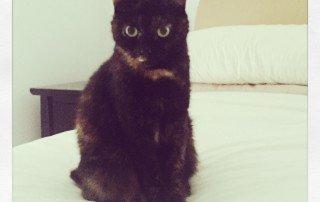Miss Olivia doing her best Grumpy Cat impression!